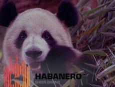 Игровой автомат Умилительные панды в новом игровом cимуляторе от Habanero